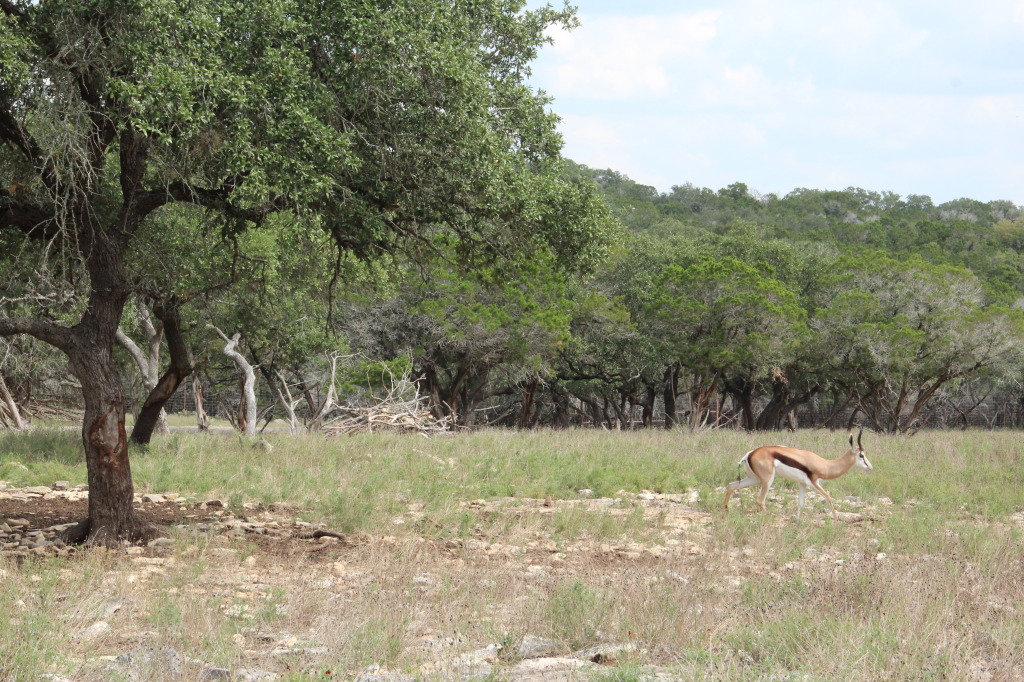 Safari en Texas